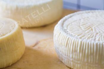 Качотта из козьего молока  - Fratelli Spirini - производство сыров в Екатеринбурге